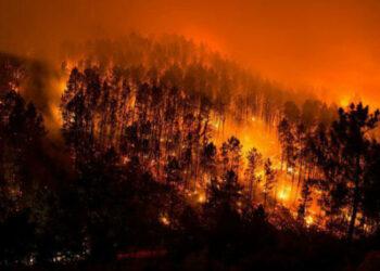 La política forestal y el deterioro climático, factores clave en los incendios de Galicia, Asturias, León y Portugal
