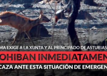 PACMA presenta un plan para evacuar animales en catástrofes como los incendios de Galicia