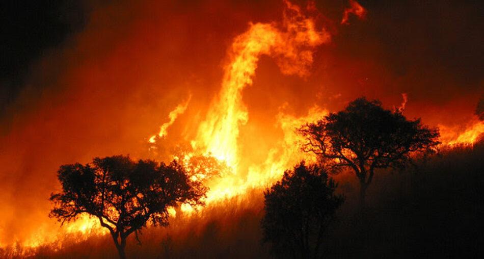 Greenpeace demanda un mayor esfuerzo en la persecución de los incendiarios que queman el bosque