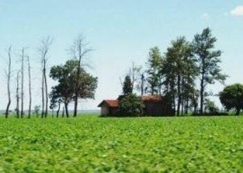 Paraguay. Sojización una de las causas del por qué se destruyen familias campesinas, afirman