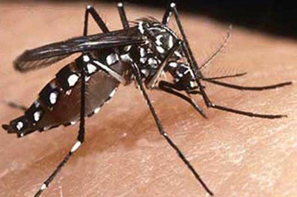 India cierra 2017 con alta cifra de dengue, malaria y chikungunya