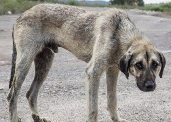 AENA en el Aeropuerto de Madrid/Barajas PROHIBE alimentar a animales que están ya en el recinto para que mueran de inanición