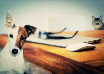 EQUO ratifica su firme compromiso con los derechos de los animales