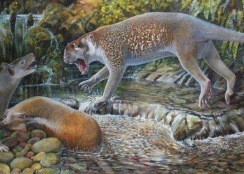 Hallan especie extinta de león marsupial del tamaño de un perro