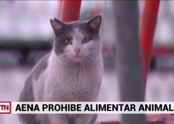 El Sindicato CSIF AENA/ENAIRE y la Protectora GFAM, Gestión Felina Aeroportuaria Madrid, piden una gestión ética a todos los animales del recinto aeroportuario