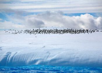 Unidos Podemos pedirá a España que apoye la creación de un santuario marino en aguas de la Antártida