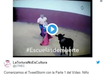 La Tortura No Es Cultura revela vídeo de niño matando becerro y  exige que los menores no puedan asistir a clases de tauromaquia como dicta la ONU