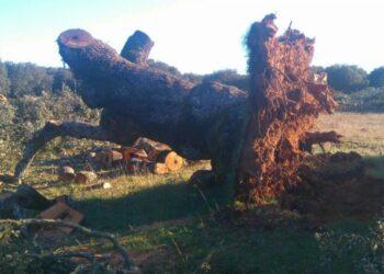 Unidos Podemos exige al Gobierno mecanismos efectivos contra la tala ilegal