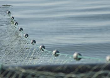 La Comisión Europea sobreestima el número de poblaciones que se pescan de forma sostenible