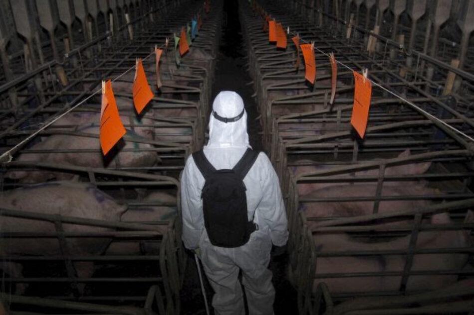 Un informe de Greenpeace pide reducir al 50% el consumo de carne para planeta y vida más saludables