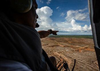Aceite de palma: el gobierno de Indonesia se pasea por Europa mientras continúa la deforestación