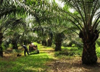 Unidos Podemos exige a la Ministra Tejerina que rechace el uso del aceite de palma como biocombustible