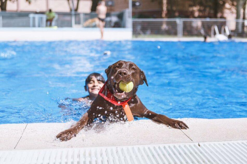 Cambiemos Murcia propondrá en el Pleno celebrar un día de puertas abiertas para perros en las piscinas municipales