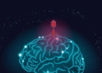 Un nuevo estudio respalda la conexión entre virus y alzhéimer