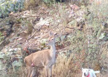 Ecologistas Extremadura pide información sobre la práctica de la caza en Espacios Naturales Protegidos
