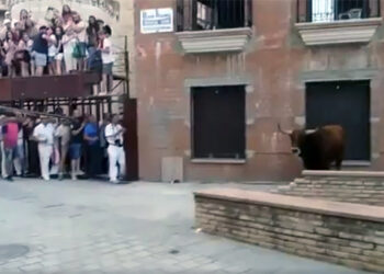 La Plataforma La Tortura No es Cultura denuncia a Coria por  matar públicamente al toro de un tiro
