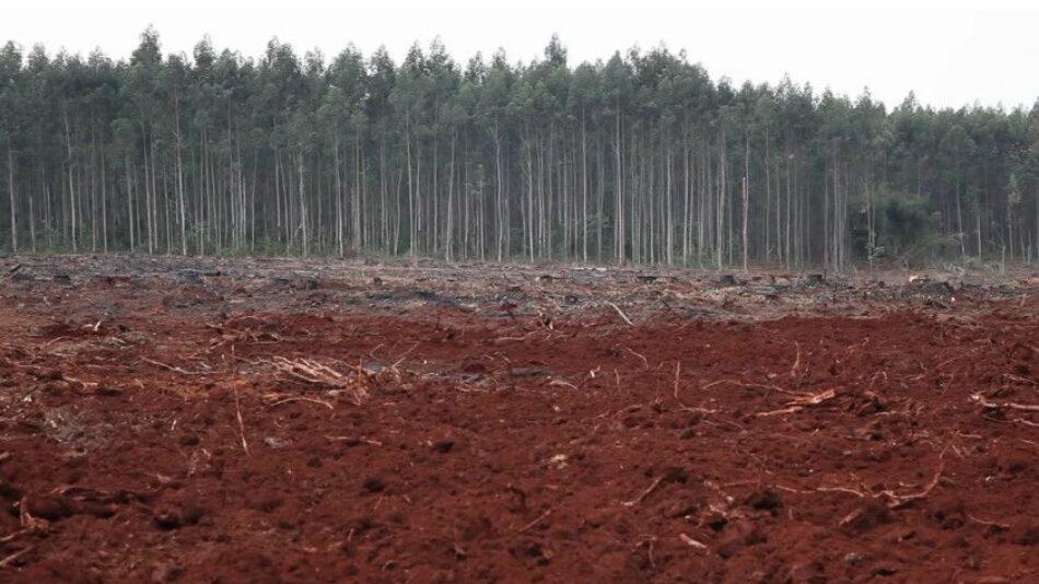 Argentina. «Roja Tierra Nuestra»: Un documental de recuperación contra Forestal Arauco