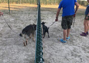 Participa Sevilla reclama nuevas zonas de esparcimiento canino en los parques públicos