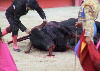 Piden el fin de las subvenciones a la tauromaquia tras tres graves heridos