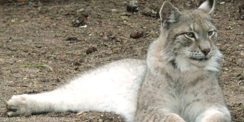 Se publica en el BOE el listado de las 32 especies extinguidas en España