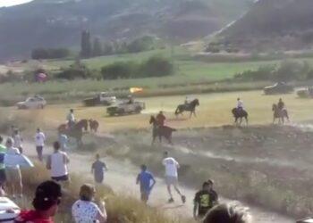 PACMA denuncia el atropello de un toro en un encierro por el campo en Centenera (Guadalajara)
