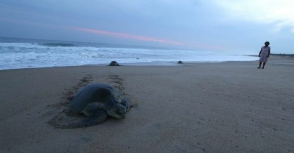 Hallan 122 tortugas marinas muertas en México con rasgos de tortura
