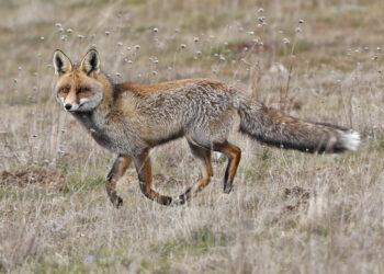 La caza a examen en Extremadura