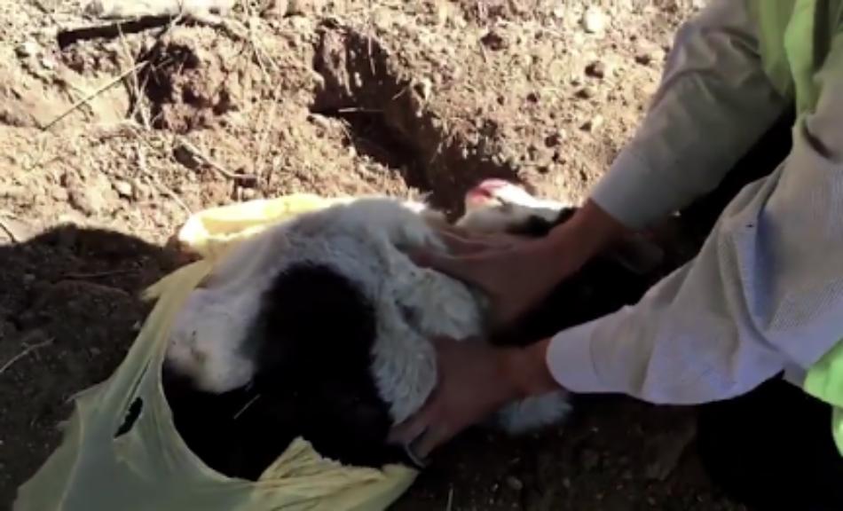 Brigada de Defensa Animal denuncia el atropello de animales en las carreteras de Madrid