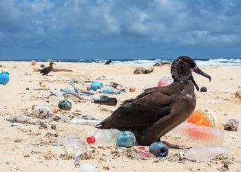 Sí Se Puede Alcobendas presentará una¬ moción para concienciar sobre el uso de plásticos