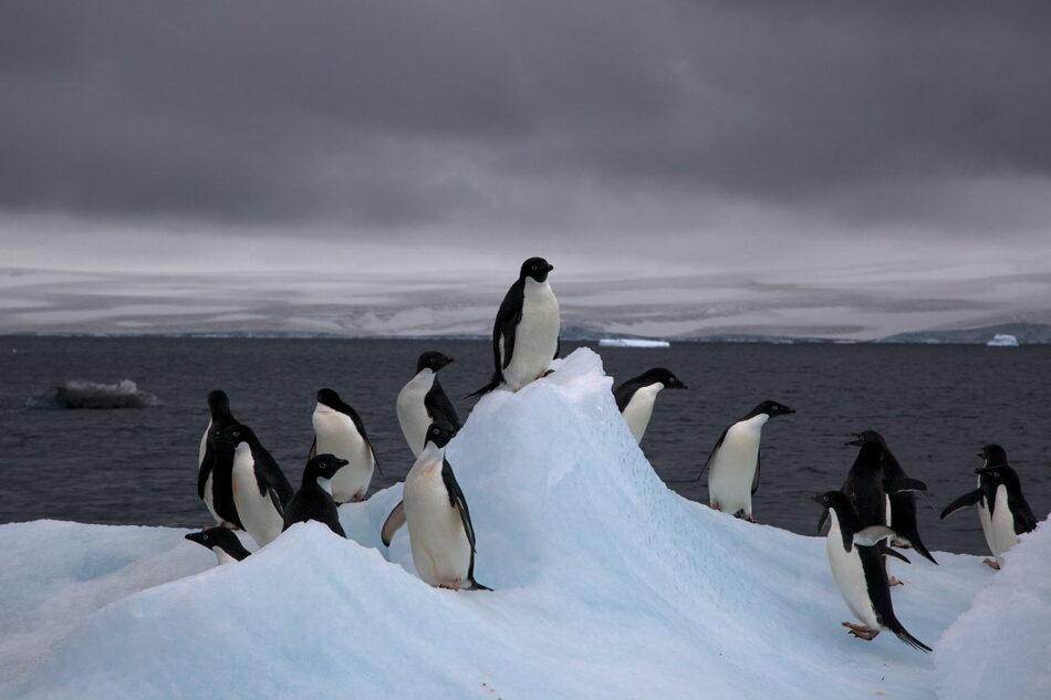 Greenpeace celebra el apoyo del Gobierno español a la creación de un Santuario Antártico