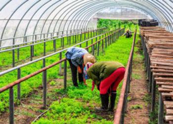 Cuba, líder mundial en agricultura urbana: no lo leerán, ya lo diga la FAO