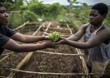 Cuba asume la vicepresidencia de Comité de Agricultura de la FAO