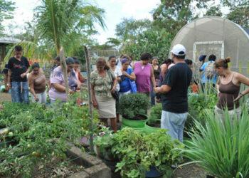 Nicaragua impulsa el programa «patio saludable» que potencia la agricultura urbana