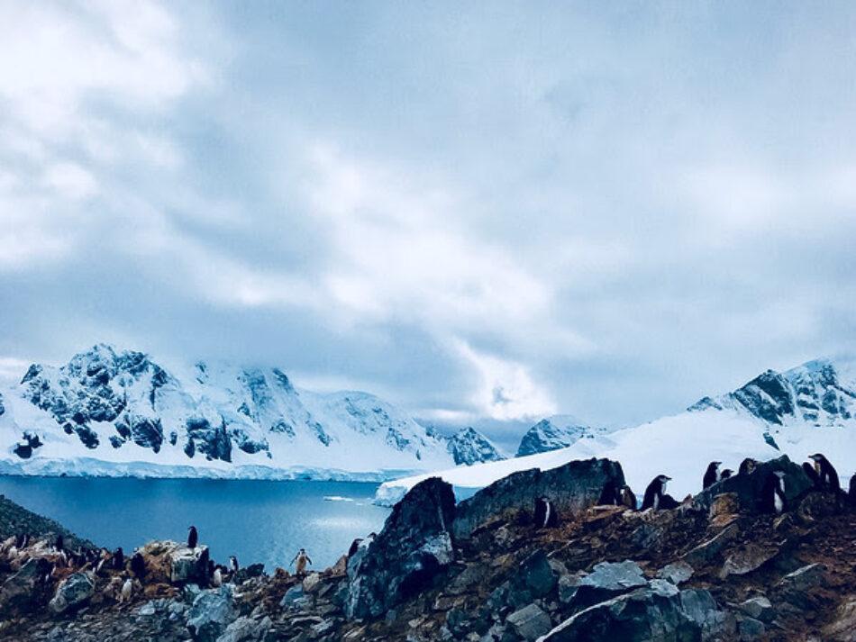 """Greenpeace acusa a la Comisión del Océano Antártico de """"no cumplir su mandato"""" para proteger las aguas antárticas"""