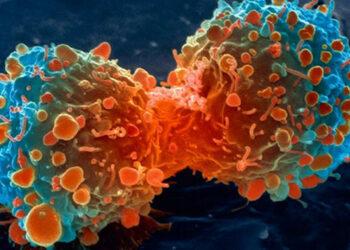 En el inicio del cáncer: una lupa para investigar el Big Bang tumoral