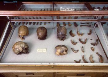La compleja prehistoria genética de América