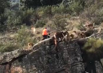 «El vídeo viral del acantilado es sólo la punta del iceberg de la caza»