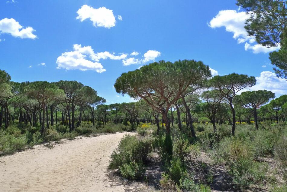 Ecologistas en Acción pide que la conservación de Doñana no que de condicionada por la deriva de los escenarios políticos