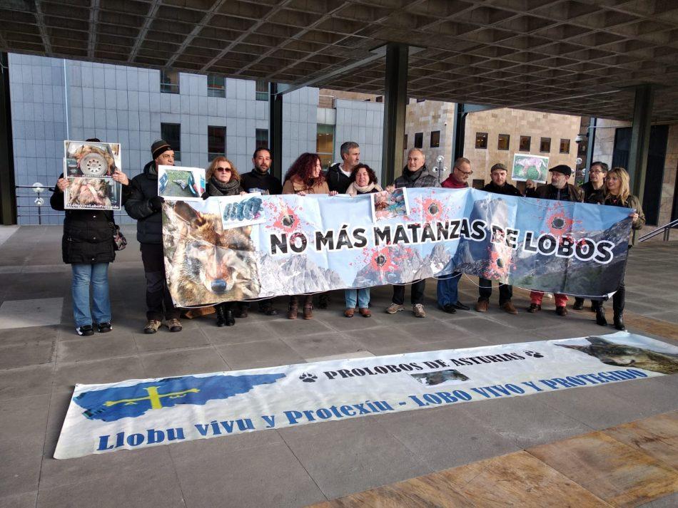 Organizaciones ambientales de Asturies, Cantabria y Castilla León reclaman la paralización de los controles de lobos