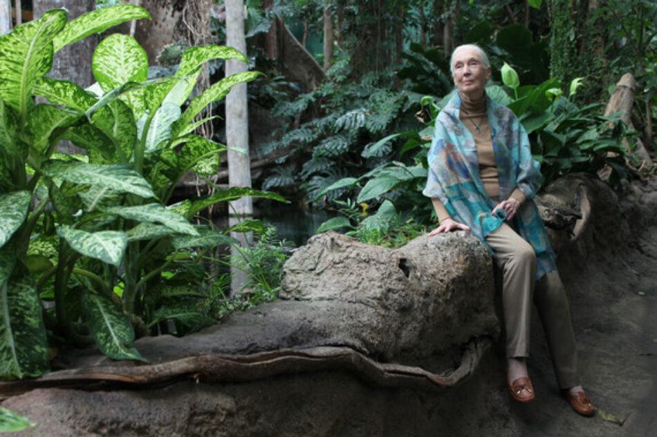 """Jane Goodall: """"Estamos viviendo la sexta extinción masiva de especies, causada por nosotros"""""""