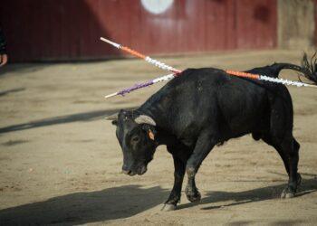 PACMA consigue que se sancione al Ayuntamiento de El Espinar