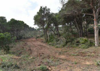 Catalunya en Comú Podem demana sancions per la tala d'arbres a Aigua Xelida