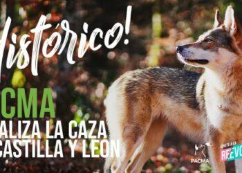 Una decisión judicial histórica da la razón a PACMA y paraliza cautelarmente la caza en toda Castilla y León