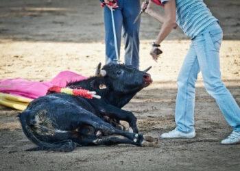 La Tortura No Es Cultura impulsa PNL para eliminar las becerradas y otros festejos