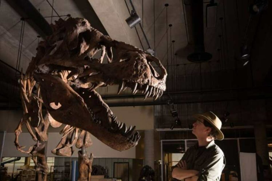 Presentan en Canadá restos del Tyrannosaurus Rex más grande del mundo