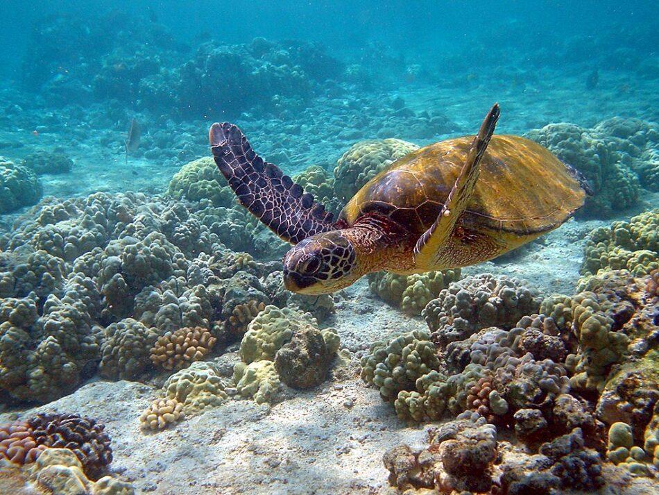 Día mundial de la vida silvestre: la vida subacuática
