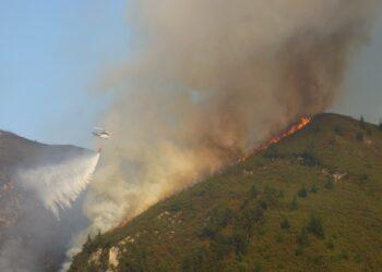 Coordinadora Ecoloxista: «Tras la ola de incendios qué hacemos»