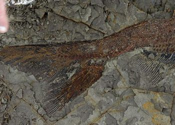 La apocalíptica imagen del último día de los dinosaurios en EEUU