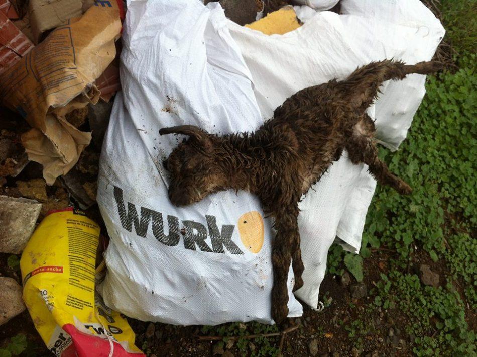 Inoperancia de las administraciones ante el maltrato continuado a miles de animales en Canarias