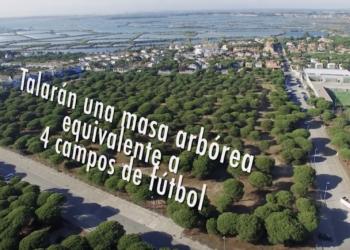 López de Uralde solicita paralizar la construcción de 206 viviendas en un pinar en Costa Sancti Petri